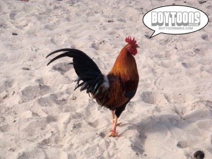 Yes it's true. Puerto Rican's have really beautiful, big cocks. They run wild on the beaches!  LOL!